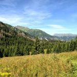 Bogactwo rumuńskich lasów